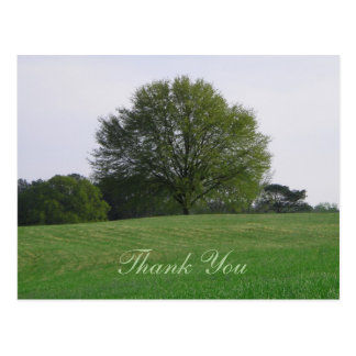 Water Oak Tree Thank You Postcard