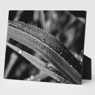 Water on grass display plaque