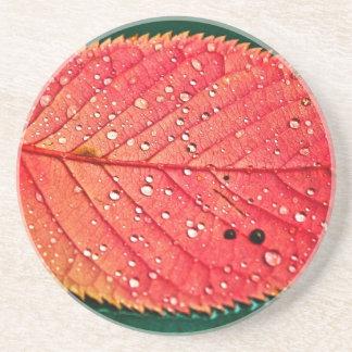 Water on Leaf Beverage Coasters