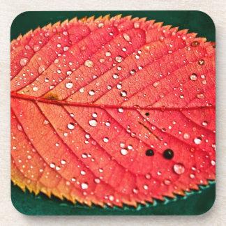 Water on Leaf Drink Coasters
