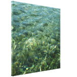 Water over Sea Grass I Blue and Green Nature Photo Canvas Print