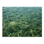 Water over Sea Grass I Blue and Green Nature Photo Postcard