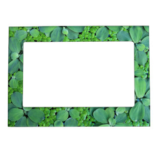 Water plant magnetic frame
