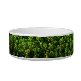 Water plants underwater in pond pet food bowl