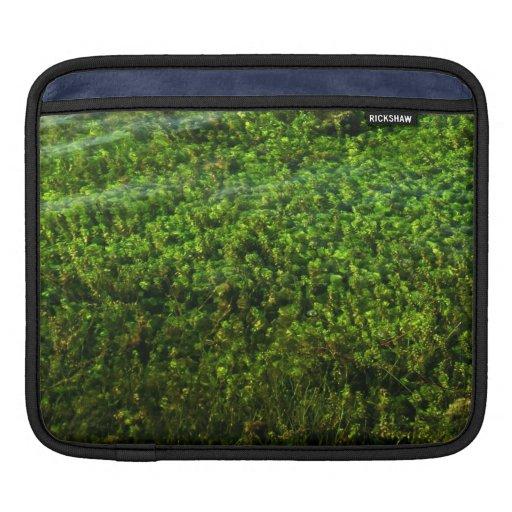 Water plants underwater in pond sleeves for iPads
