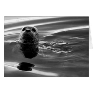 Water Puppy Greeting Cards