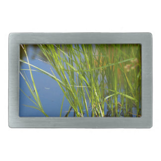 Water reeds growing out of the water belt buckle