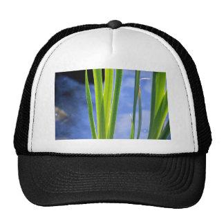 Water Reeds Mesh Hat