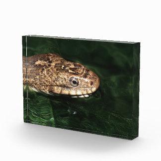 water snake award