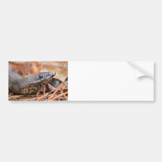 Water Snake Bumper Sticker