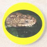water snake coaster