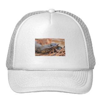 Water Snake Mesh Hats