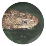 water snake plate