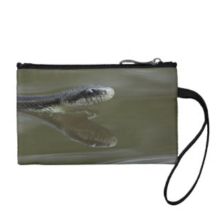 Water snake swimming with reflection coin wallet