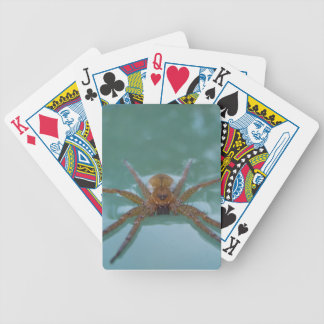 Water Spider Bicycle Card Deck