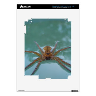 Water Spider Decal For iPad 3