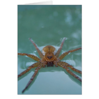 Water Spider Greeting Cards