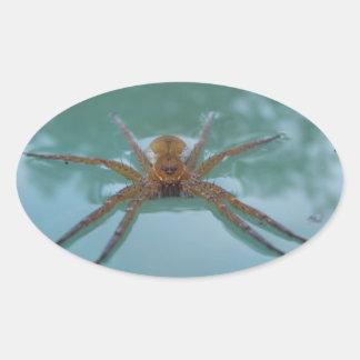 Water Spider Oval Sticker