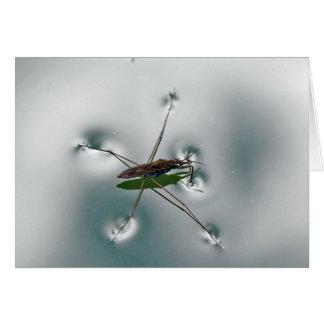 Water strider card