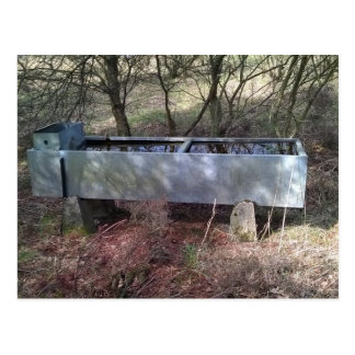 Water trough in the woods postcard
