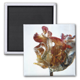 Water Tulip 4 2013 photograph 2 Inch Square Magnet