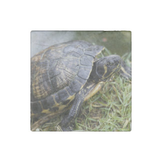 Water Turtle Stone Magnet