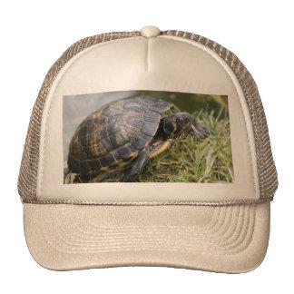 Water Turtle Mesh Hats