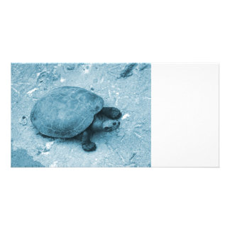 water turtle on bank blue tint reptile photo card
