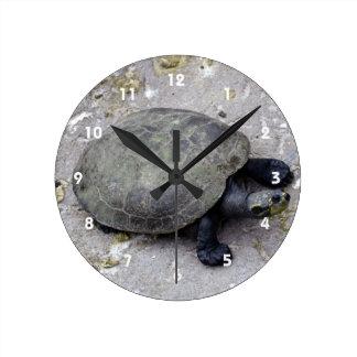 water turtle on bank round wallclocks