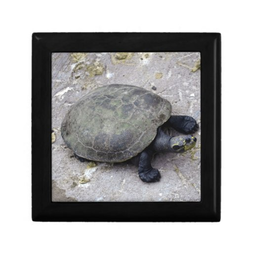 water turtle on bank gift boxes