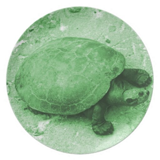 water turtle on bank green reptile party plate