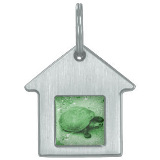 water turtle on bank green reptile pet name tag