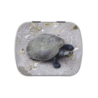 water turtle on bank jelly belly tins