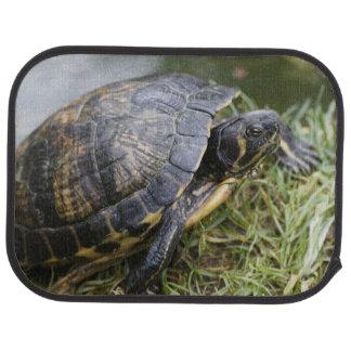 Water Turtle Floor Mat