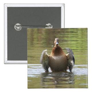 Water Walking Mallard Pinback Button