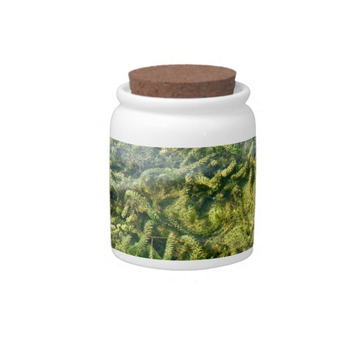 Water weeds under water background candy dishes