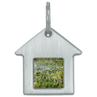 Water weeds under water background pet ID tag