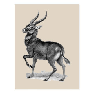 Waterbuck Postcard