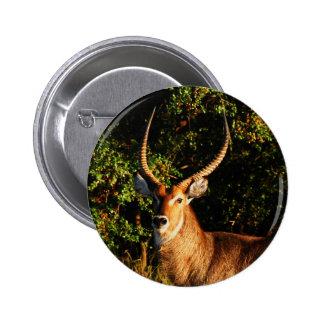 Waterbuck - safari animals badges, buttons