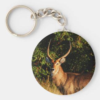 Waterbuck - safari animals keyrings keychain