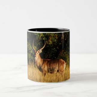 Waterbuck safari coffee mugs & cups