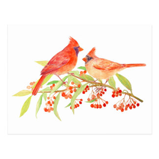 Watercolor a pair of Cardinals post Card