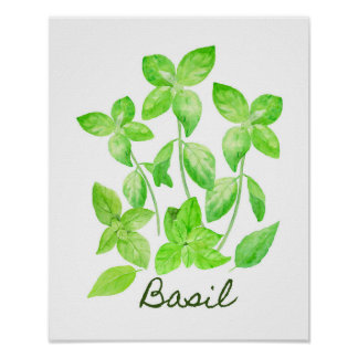 Watercolor Basil Illustration Poster