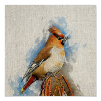 Watercolor Bird - Bohemian waxwing Canvas Print