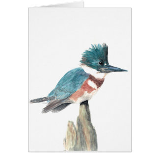 Watercolor bird greeting card: Belted Kingfisher Card