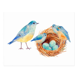 Watercolor Blue Birds and Nest Post Card