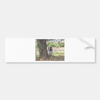 Watercolor Boer Goat Bumper Sticker