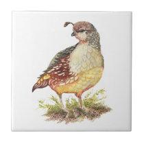 Watercolor California Quail Bird Wildlife Art Ceramic Tile
