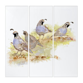 Watercolor California Quail Bird Wildlife Art Triptych