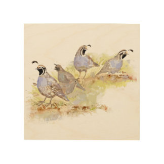 Watercolor California Quail State Bird Nature art